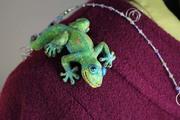 Gecko Shoulder