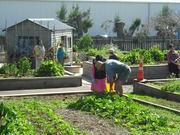 CCS Disability Action Community Gardens, Royal Oak