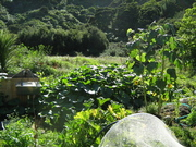 Permaculture Design Certificate Course, Tui Community
