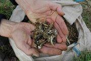 Dirt Doctor Urban Eden weekend workshop - Upper Hutt