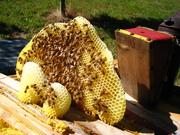 Top Bar Beekeeping Course