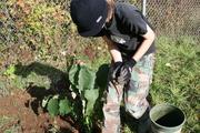 Birchwood School Garden Workparty