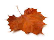 Letting Go Into Autumn: A Collaborative Exploration of Fall