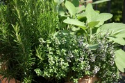 Herbal Medicine Preparation and Gift Giving