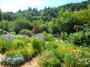 Food Forest workshop at Wild Thyme Farm