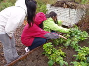 Shuksan MS Make a Difference Day Garden Workparty!
