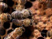 Bee The Change