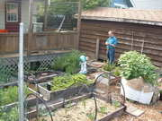 Food Growing Fundamentals:  A Hands-on Workshop for New Gardeners.