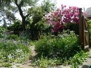 Diversity in the Garden- Tour of an Urban Homestead