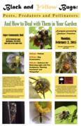 Black and Yellow Bug Presentation and Celebration