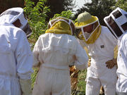 Stage d'apiculture: initiation les 26 et 27 septembre 2015