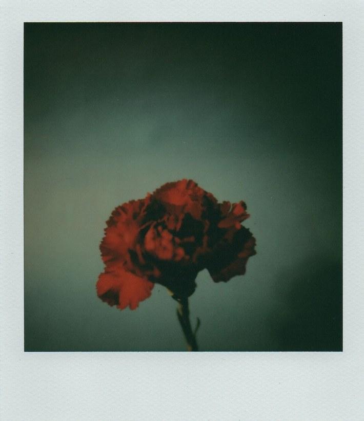 The fleur of Evil