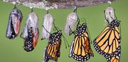 Choosing Transformation