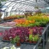 Wolves Lane Horticultural Nursery fun day