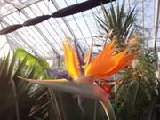 Broomfield Park Conservatory