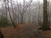 Winter Tree Walk in Coldfall Wood
