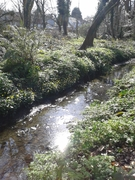 Salmons Brook SuDS Walk - Thames21 10th Anniversary Event
