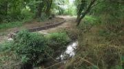 Glenbrook SuDS Planting - Part 1