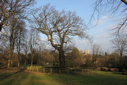Winter Tree Walk in Alexandra Park