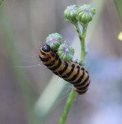 Family Bug Hunt