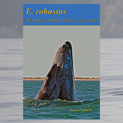 Gray Whale Populations: the Eastern/Western Paradox