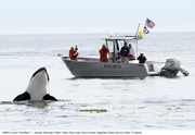 Saving the Southern Resident Killer Whales - free lecture