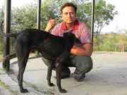 dog with injured hind leg