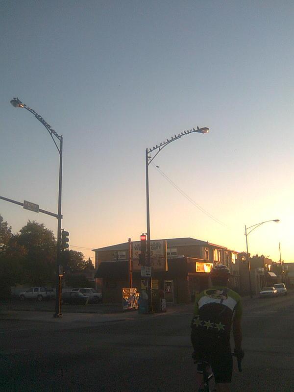 Birds on Lightposts