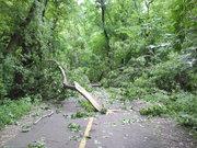 Fallen tree on North Branch trail