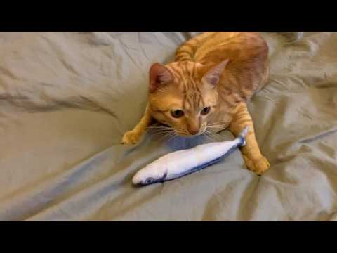 Funny cats video for kids!