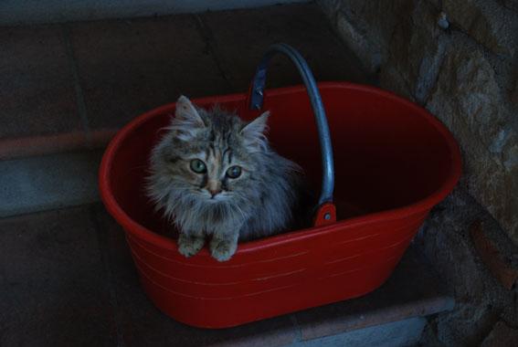 Silvia's cat