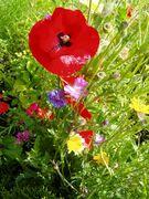flowers in tirol austria
