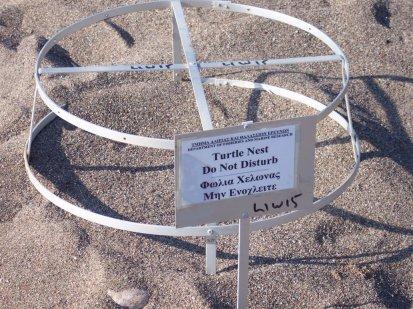 Cyprus turtle nest 160