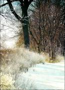 Snowscene0000