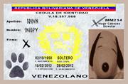 Dia 19 Una falsificación Indira Rojas