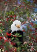 Aguila sospechosa