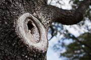 Preguntamos donde está la rama.