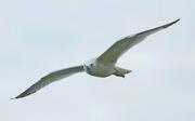 Seagull 001