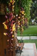 Flores Hacienda La Trinidad