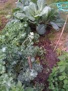 Kale and Collard Greens