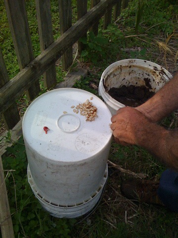 Manure and seed