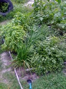 Herb love
