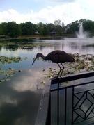 Zoobird!