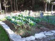 Our Winter Garden