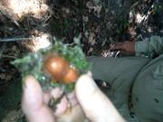 Mushroom 11 at Wildcat