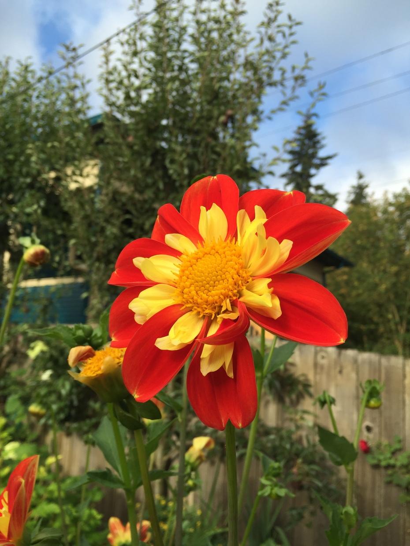 Portland Flower