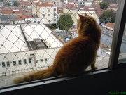 Amarelo olhando a cidade
