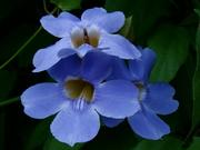 Flores do caminho