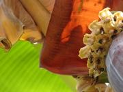 Abelhas, bananeira e outros bichinhos