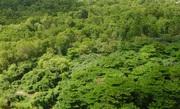 Parque Ecológico do Cocó, com vegetação e fauna preservada.